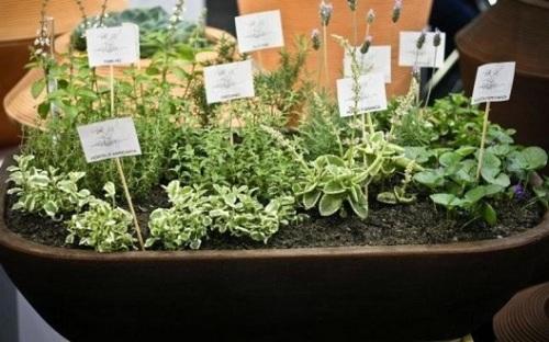 96954-jardim-jardins-de-especiarias-e-ervas-mc3-arquitetura-viva-decora-96954