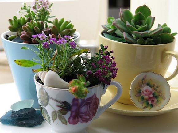 plantas-na-cozinha-6